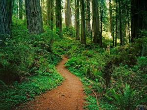 Path_in_the_woods_Wallpaper_fhd1g