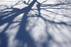 tree-branch-shadows-on-snow